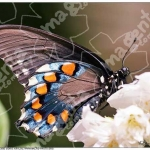 Живые тропические бабочки в Запорожье.