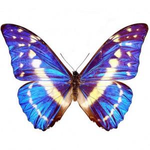 Выбирайте и покупайте живых тропических бабочек в Запорожье. Вы оформить доставку тропические бабочки в Запорожье по доступной цене. Стоимость тропических бабочек в Запорожье.
