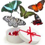 живые бабочки в Запорожье