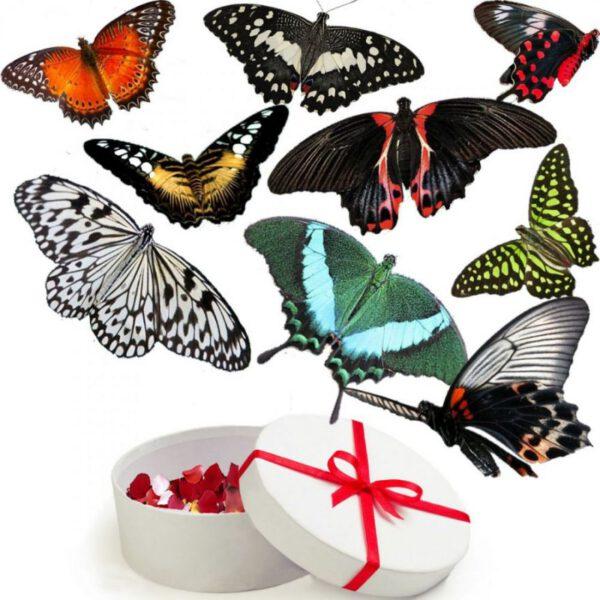 живые бабочки в Запорожье (2)