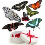 купить живых бабочек в Запорожье