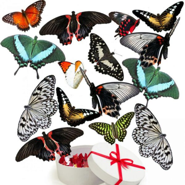 продажа живых бабочек в Запорожье