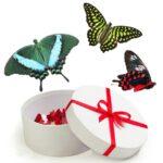 Салют из бабочек в Запорожье