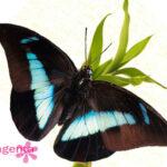 Бабочки в Запорожье купить