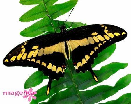Бабочки в Запорожье с доставкой