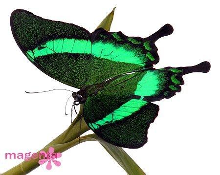 Бабочки в Запорожье