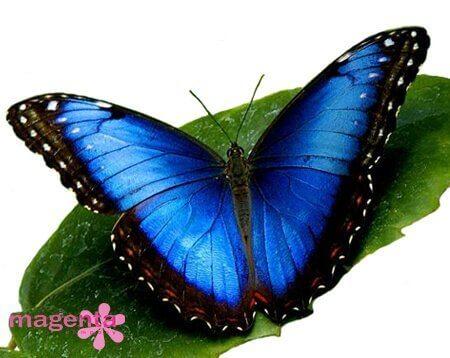 Живые бабочки Запорожье