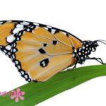 Заказать бабочек на дом в Запорожье