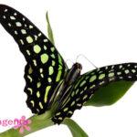 бабочки Запорожье