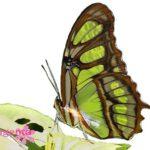 бабочки с доставкой в Запорожье