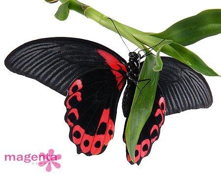 живые тропические бабочки в Запорожье