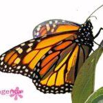заказать живы бабочек в Запорожье