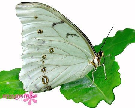 заказ живы бабочек в Запорожье