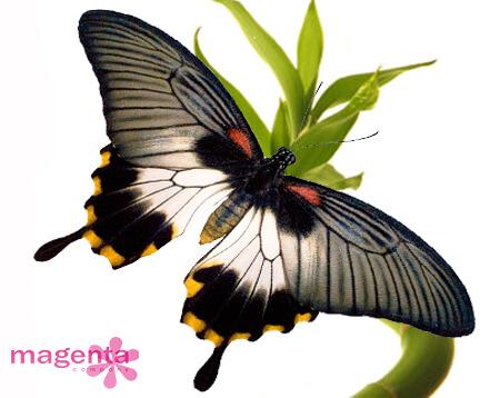 купить живые бабочки в Запорожье