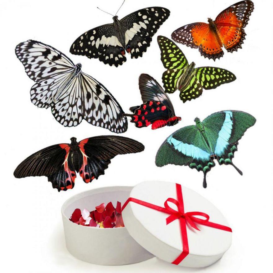 Купить живые бабочки Запорожье